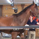Horse on a treadmill goes viral [VIDEO]